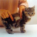 Осмотрите шерсть котенка