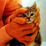 Осмотрите глазки котенка