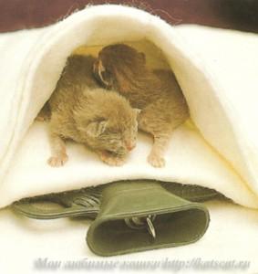 Если кошке нужно тепло, используйте обернутую в полотенце горячую грелку