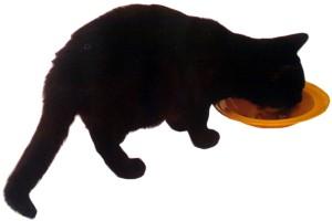 Кошки весьма избирательно подходят к еде