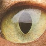 Раскосые глаза