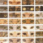 Формы кошачьих глаз