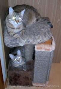 Домик для кошек с когтеточкой