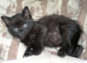 Черный котенок Семен