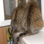 Две девицы под окном