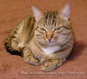 Кот Макс мог многое стерпеть от моей маленькой дочери