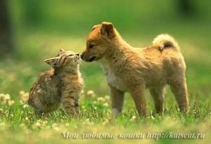 Котенок и щенок такие разные, но все же они друзья
