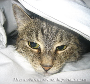 Заболевшую кошку держите в тепле