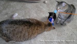 Кошки любого возраста с удовольствием играют с перышком