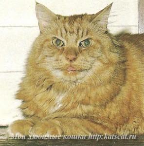 Этому почтенному коту 17 лет