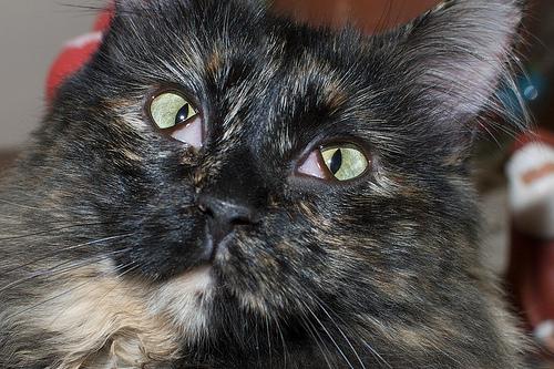 у котенка третье веко фото