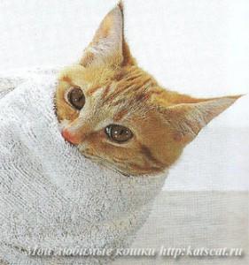 Ограничение подвижности кошки с помощью полотенца