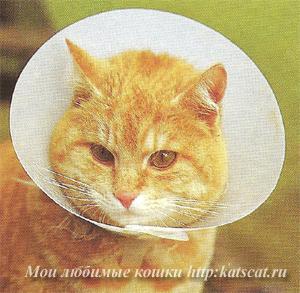 Специальный воротник не дает кошке разлизывать рану