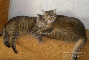 Муся и Нюша