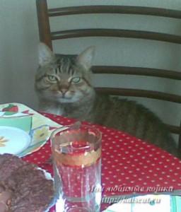 Макс всегда готов отобедать :)