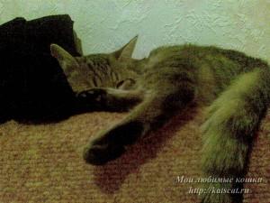 Муся спит