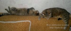 С Нюшей, Муся справа
