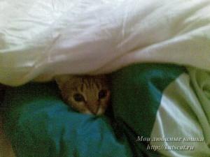Спряталась