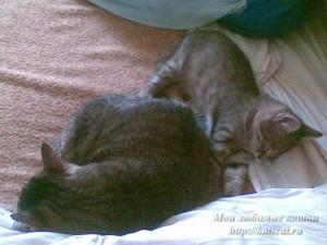 Рядом с Максом можно спать спокойно