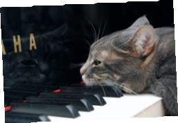 Нора за фортепиано