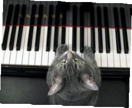 Кошка-пианист