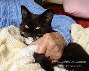 Кот - лекарь
